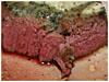 zart-kraeuterbutter-fleisch